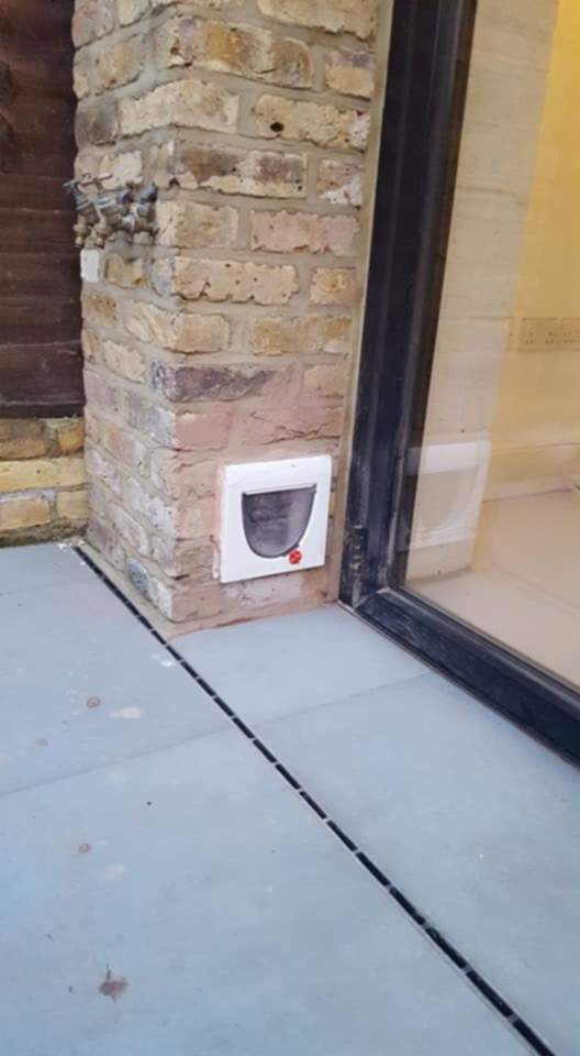 cat_flap_in_wall_outside